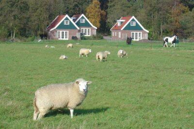 Natuurhuisje in Den burg 31376 - Nederland - Waddeneilanden - 4 personen