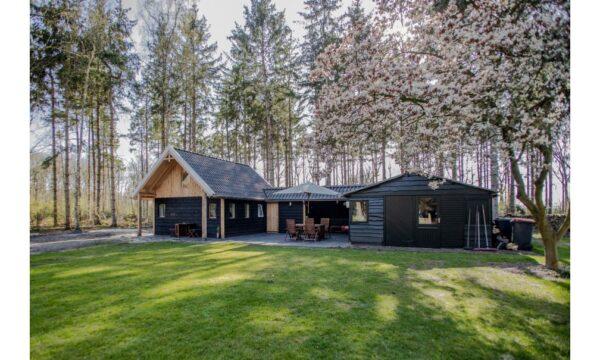 Natuurhuisje in Rheezerveen 55583 - Nederland - Overijssel - 4 personen - in het bos