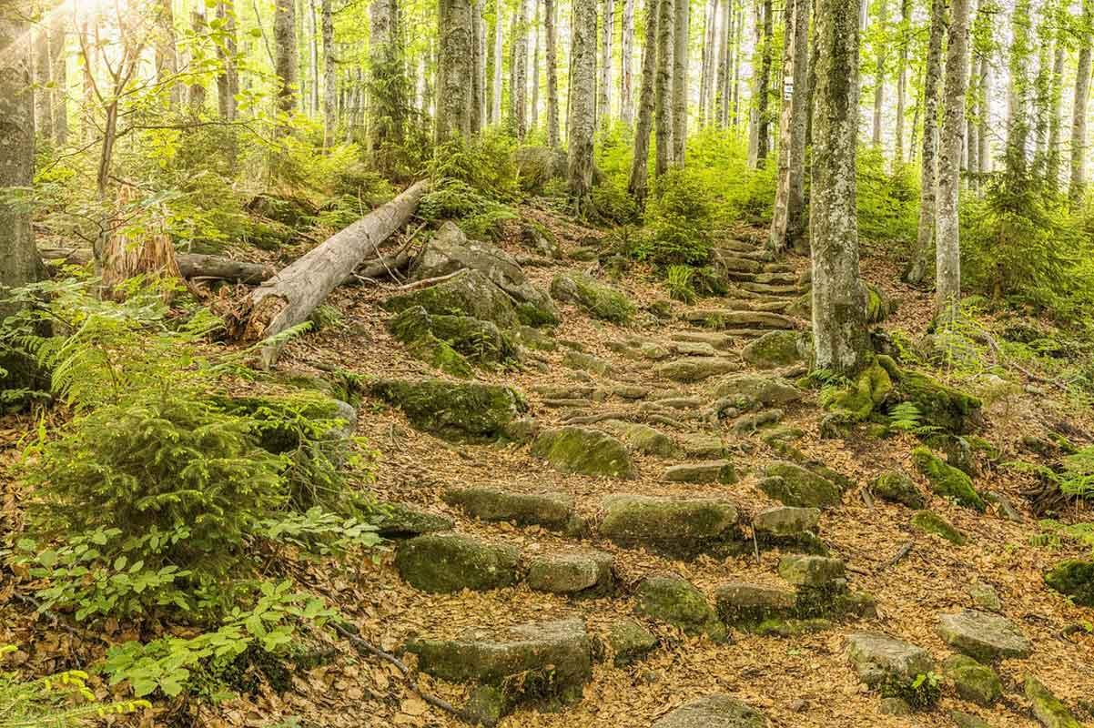 Beierse woud Duitsland