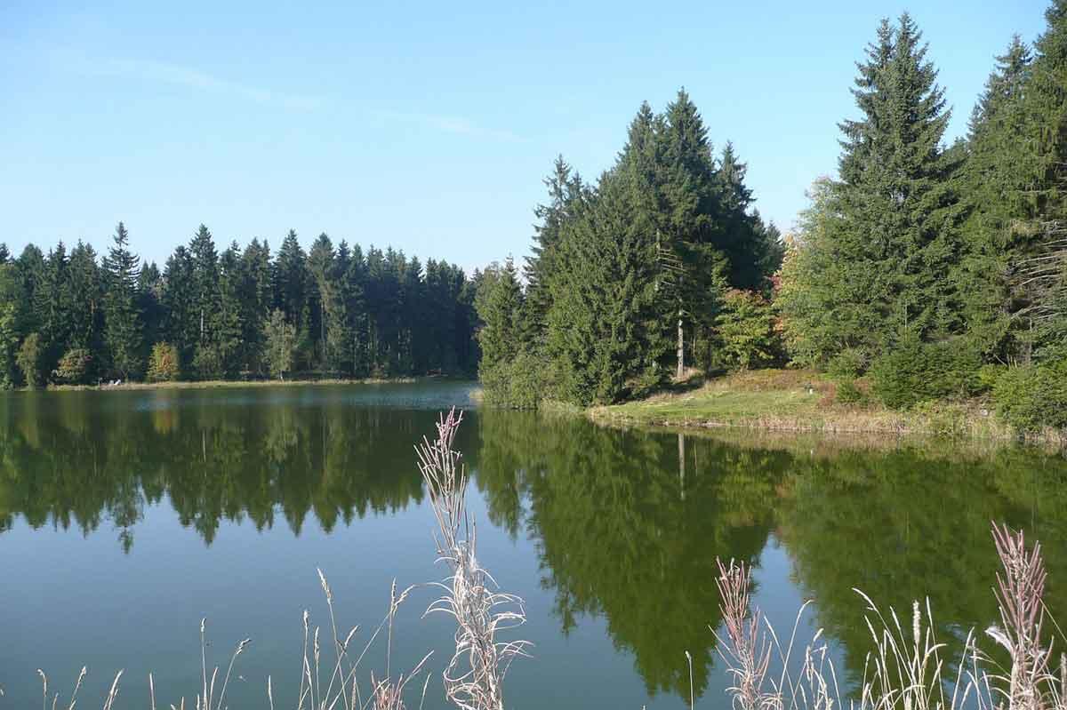 Bos Duitsland - Harz