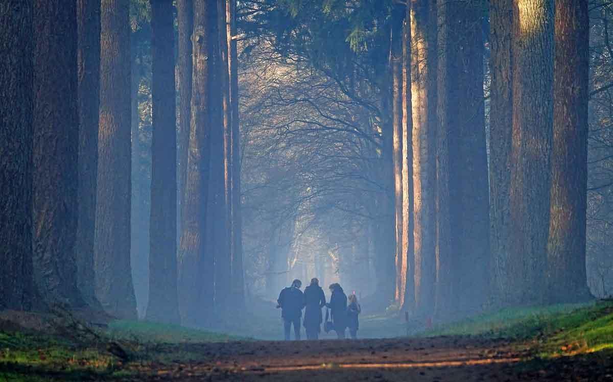 mist in het bos op de Veluwe