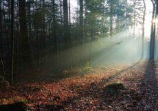 mooiste bossen op de Veluwe